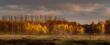 Field в восходе солнца в городке Blaricum Стоковое Фото