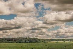 Field в приходить освещенный лесом по солнцу вне из-под clo Стоковое Фото