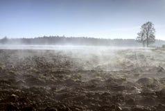 Field в тумане и двойном дереве в тумане утра Стоковые Фото