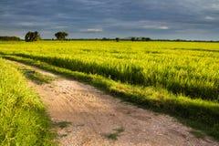 field дорога риса Стоковые Фото