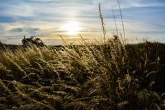 field заход солнца Стоковые Изображения