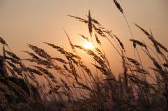 field заход солнца Стоковая Фотография RF