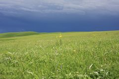 field зеленый цвет над небом бурным Стоковая Фотография RF