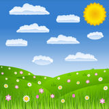 field зеленый цвет Стоковые Фотографии RF