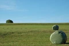 field зеленый цвет Стоковое фото RF