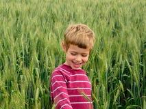 field зеленая пшеница Стоковые Фото