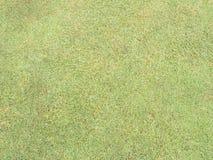 field зеленый цвет Стоковое Изображение RF