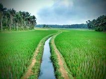 field зеленый цвет Стоковая Фотография RF