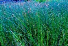 field зеленый цвет стоковые изображения
