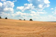field золотистая рож Стоковое Изображение RF