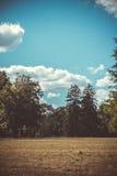 Field космос экземпляра облаков неба сосен деревьев луга Стоковые Изображения RF