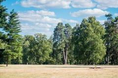 Field космос экземпляра облаков неба сосен деревьев луга Стоковые Фотографии RF