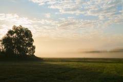 Field, край леса в раннем утре Туман, осень стоковая фотография