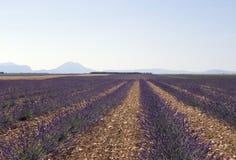 field лаванда горизонта Стоковая Фотография
