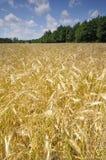 field лето Стоковая Фотография