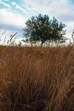 field одиночный вал Стоковое Изображение RF