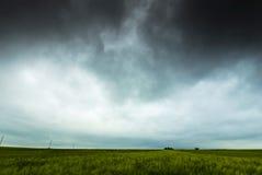 field пшеница Стоковые Изображения