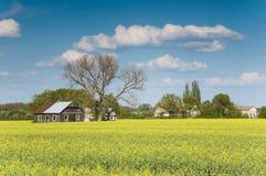 field рапс oilseed Стоковое Изображение RF