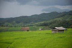 field рис Стоковые Изображения