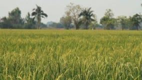 field рис видеоматериал