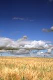 field рож стоковая фотография