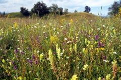 field сено Стоковые Изображения