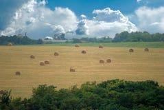 field снопы Стоковые Фото