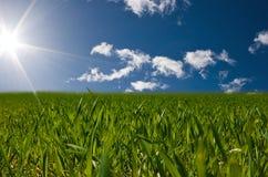 field солнечное стоковые изображения rf