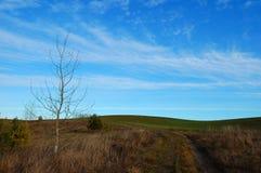 Field с сельской дорогой, нагим деревом и голубым небом Стоковые Фото