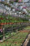 Field с цветками весны и лета в парнике на солнечном свете желтый цвет картины сердца цветков падения бабочки флористический Стоковое фото RF