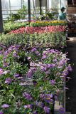 Field с цветками весны и лета в парнике на солнечном свете желтый цвет картины сердца цветков падения бабочки флористический Стоковые Изображения