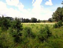 Field с яркими цветками, соснами и голубым небом Стоковое Изображение