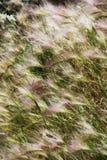 field трава Стоковая Фотография RF