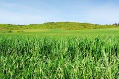 field трава Стоковые Изображения RF