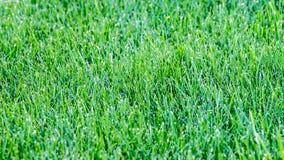 field трава Стоковые Фотографии RF