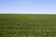 field трава стоковое изображение rf