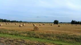 field трава Стоковое Изображение
