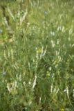field трава Стоковое фото RF