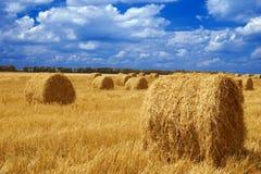 field хлебоуборка Стоковая Фотография RF
