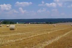 field хлебоуборка Стоковые Фото