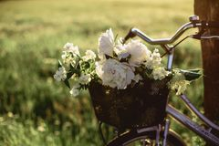 Field цветки на хоботе идя велосипеда Стоковые Фото