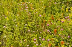 field цветки одичалые Стоковое фото RF