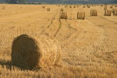 Field. Big stacks on a summer field royalty free stock photography
