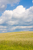 Field. A background of a large field Royalty Free Stock Image