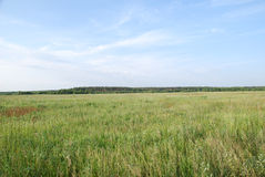 Field. Russian pole wich is near the Moscow Stock Photography