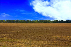 Field. Large beautiful autumn the field with a distant kind on a forest Royalty Free Stock Photography