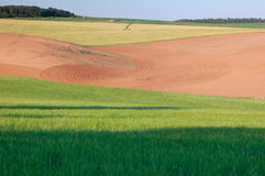 Field. Green wheat and the field is fallow. Spring Royalty Free Stock Image