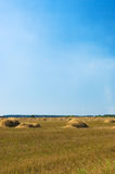Field. Straw bales on field under blue sky Stock Photo