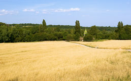 Field. Wheat field with cloudy summer sky Stock Photography