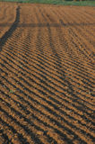 The field. In the mornig, a farmer have hard working for the new seed royalty free stock images